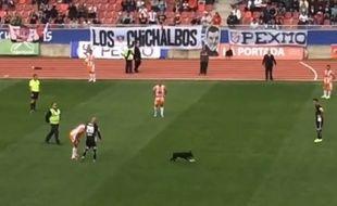 Le chien envahit la pelouse de la rencontre entre Colo Colo et Cobresal le 16 août 2015.