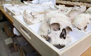 Des ossements dans un laboratoire de recherche. Illustration.
