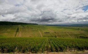 Un domaine à Chablis. Une partie du vignoble chablisien, dans l'Yonne, a été touché vendredi soir par la grêle
