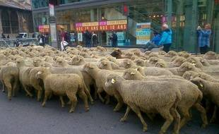 Lyon, le 9 octobre 2017. Des centaines d'éleveurs ont manifesté ce lundi dans le centre de Lyon, avec leurs brebis, pour protester contre le plan loup.