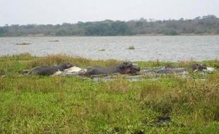 Le Rwanda veut réintroduire l'année prochaine des lions et des rhinocéros, en provenance d'Afrique du Sud, dans son unique parc de savane, a-t-on appris mercredi de source officielle.