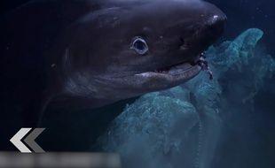 Des requins attaquent une équipe de tournage - Le Rewind (video)