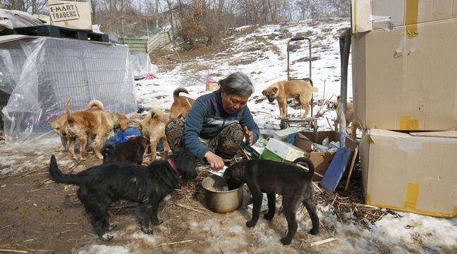 Jung Myoung Sook veille à ce que ses chiots ne manquent de rien. – L.Jin-man/AP/SIPA