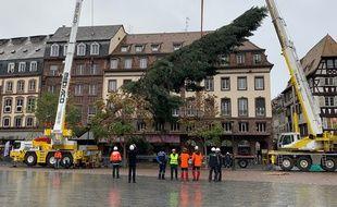 VIDEO. Strasbourg : Le grand sapin de Noël est arrivé