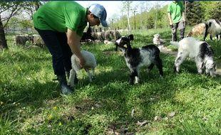 Anna, la bergère gersoise qui s'installe dans la Ville rose pour trois mois avec ses bêtes.