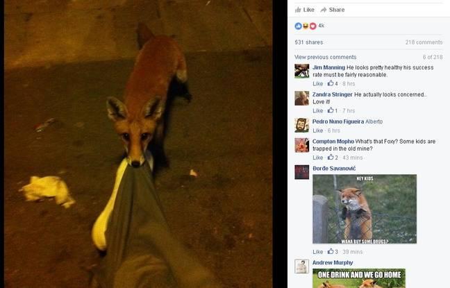 Un Anglais ivre a été réveillé par un renard.