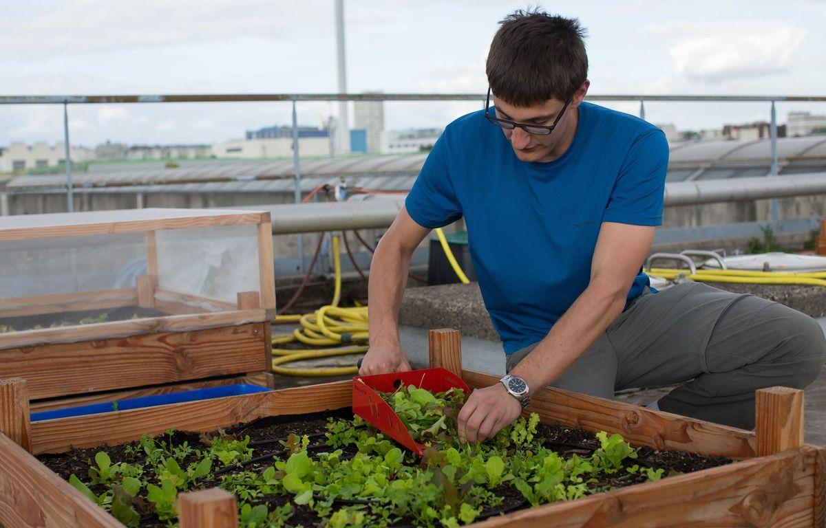 Un exemple d'agriculture urbaine, à Ivry.  – MEIGNEUX/SIPA