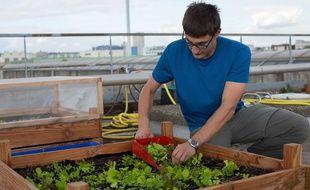 Un exemple d'agriculture urbaine, à Ivry.