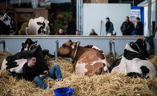 Le Salon de l'Agriculture à Paris, le 21 février 2020.