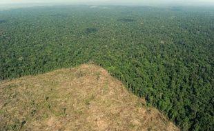 Le groupe indonésien Asia Pulp and Paper (APP), un des géants mondiaux de la production de papier et de pâte à papier, abat illégalement du ramin, une espèce d'arbres menacée, a affirmé jeudi l'organisation écologiste Greenpeace.