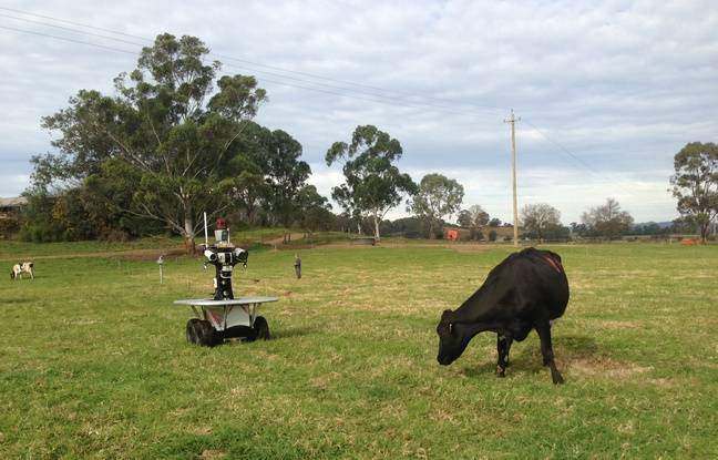 En Australie, l'ACFR, centre de recherche spécialisé dans la robotique agricole, a créé un e-berger capable de surveiller jusqu'à 150 vaches.