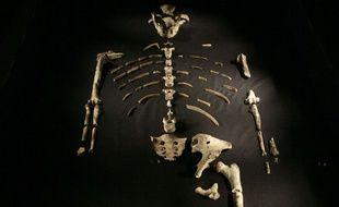 Le squelette de la célèbre Lucy
