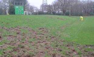 En janvier dernier, des sangliers avaient déjà ravagé les pelouses de la Jonelière.