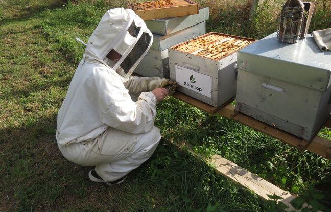 Pose de la plaque d'un parrain «Un toit pour les abeilles» sur une ruche, près de Marchiennes, dans le Nord.