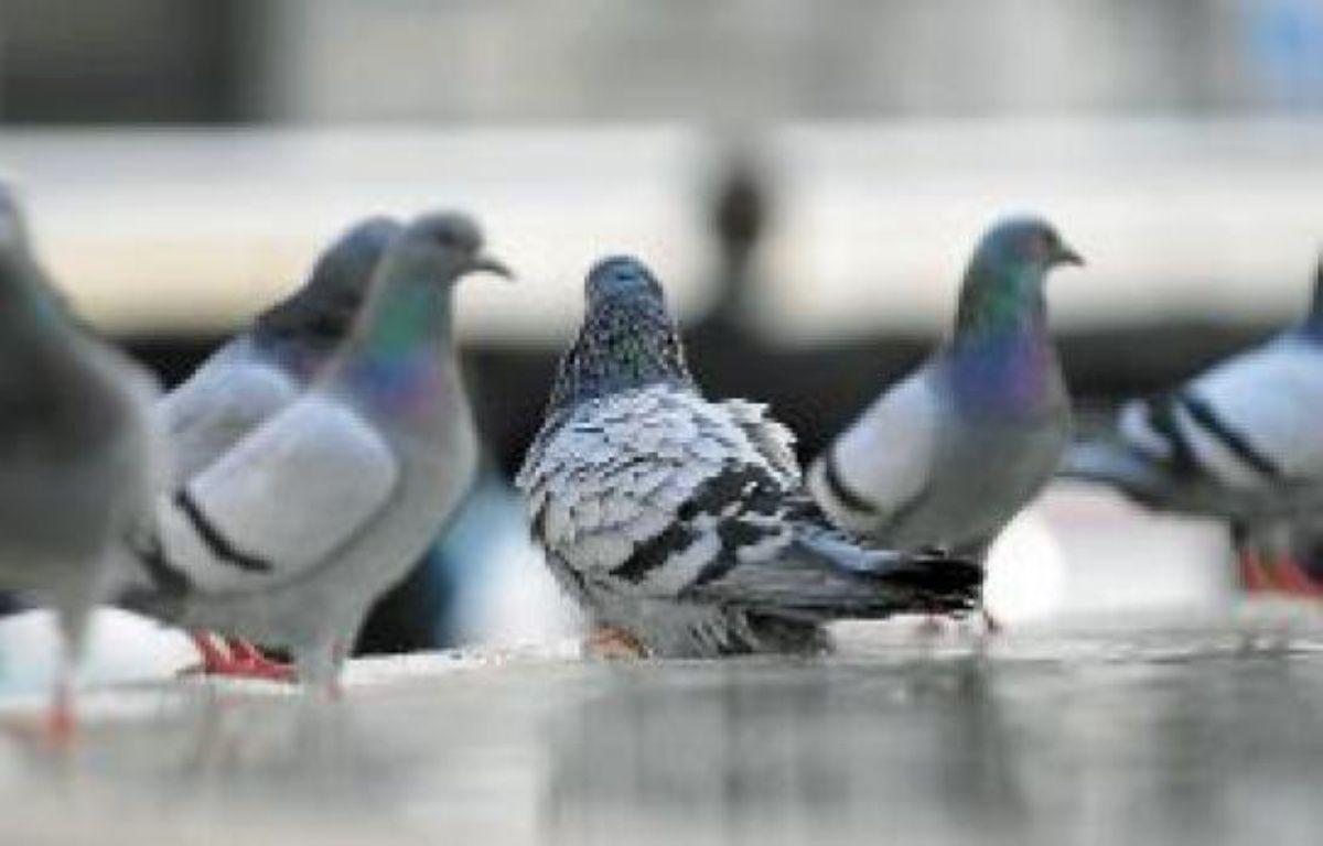 Sur Facebook, les entrepreneurs se réunissent autour du groupe Les Pigeons. –  N. CALVO VWPIC/ SUPERSTOCK / SIPA
