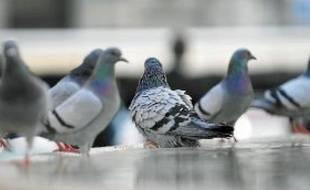 Sur Facebook, les entrepreneurs se réunissent autour du groupe Les Pigeons.