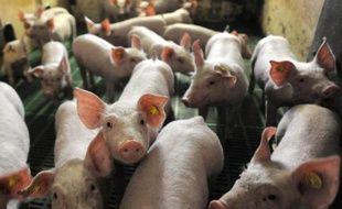 Des cochons, dans un élevage français en juillet 2010 (illustration).