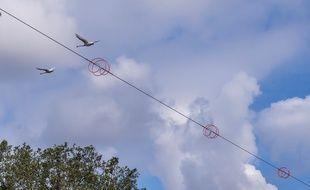 Un dispositif de protection des cygnes est en ce moment testé par la CTS à Strasbourg.
