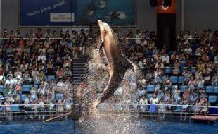 Un dauphin lors d'un spectacle à Tokyo le 11 août 2014