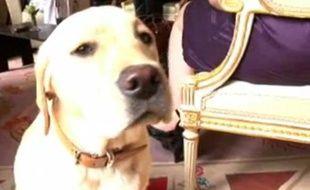 Clara, un des trois chiens du couple Sarkozy