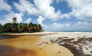 La plage du Grand Macabou, en Martinique (illustration).