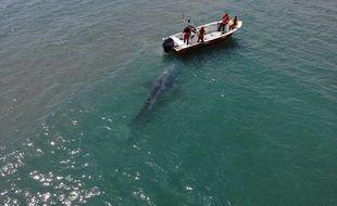 Les sapeurs-pompiers ont pu approcher la baleine, ce mardi