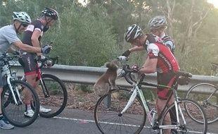 En Australie, des cyclistes se sont arrêtés sur le bord de la route pour donner de l'eau à un petit koala assoiffé.