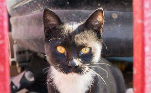 Un chat a sauvé son maître des flammes et d'une intoxication au monoxyde de carbone en Lorraine. Au retour d'une soirée, le trentenaire s'est endormi alors qu'il avait allumé son barbecue électrique dans son salon pour se faire griller des saucisses. (Illustration)