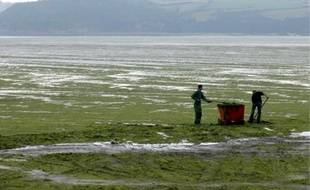 Ramassage d'algues vertes sur la plage de Saint-Michel-en-Grève (Côtes-d'Armor).