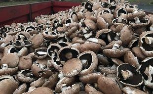 La société bretonne Lou a dû jeter 10 tonnes de champignons à cause des blocages des gilets jaunes.
