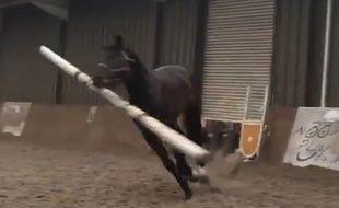 Ce cheval voulait être un chien - Le Rewind (video)