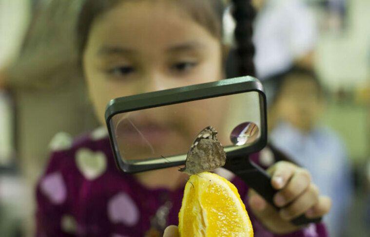 Une petite fille observe un papillon.