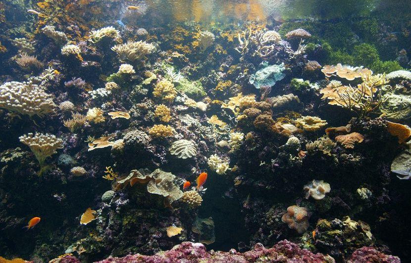 Amazonie : Des plongeurs partent à la découverte d'un récif inexploré qui pourrait abriter des espèces inconnues