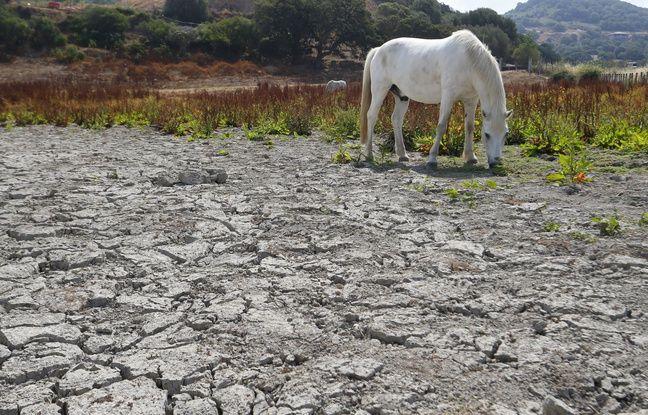 Sécheresse: L'état de catastrophe naturelle reconnu dans plusieurs départements