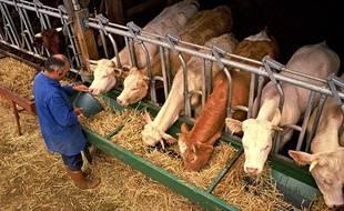 L'élevage bovin est un gros émetteur de gaz à effet de serre.
