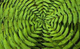 Vous ne verrez plus la fougère et les autres plantes du même œil.