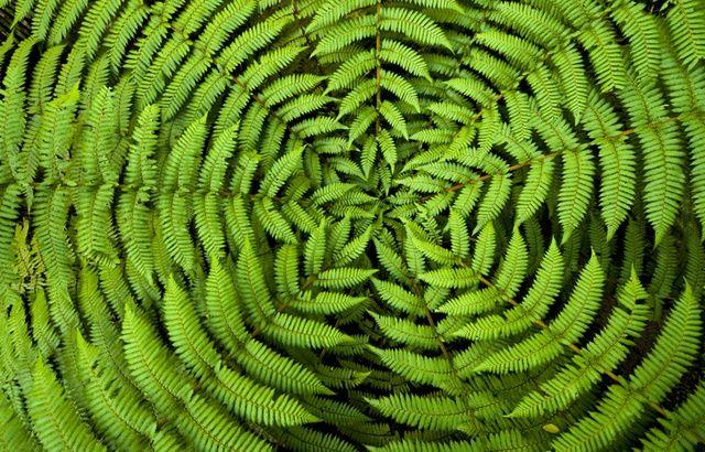 Les plantes sont-elles intelligentes ? 640x410_verrez-plus-fougere-autres-plantes