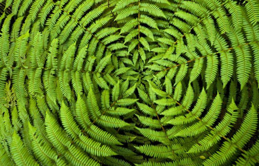 PODCAST. Les plantes sont-elles intelligentes?
