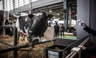 Une vache au Salon International de l'Agriculture, à Paris, Porte de Versailles, le 23 février 2019