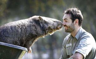 Patrick, un wombat en captivité dans un parc australien, fête ses 30 ans cette semaine.