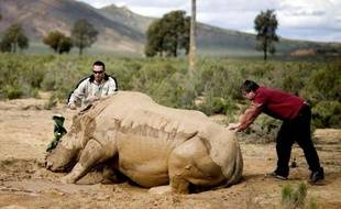 Chasseurs, petits trafiquants, fonctionnaires corrompus, propriétaires de réserves: le braconnage des rhinocéros d'Afrique du Sud s'appuie sur une organisation criminelle sophistiquée, comparable à des mafias avec leurs importants moyens, hélicoptères, fusils de gros calibre ou armes de guerre.