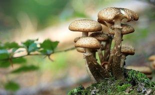 Illustration de champignons.
