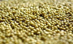 Des graines  de soja vert, également appelé haricot mungo, souvent consommées comme graines germées.