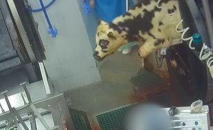 L'association de protection animale pointe des infractions à la réglementation en vigueur dans un abattoir de Dordogne.