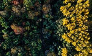 Une forêt vue du ciel sous les couleurs de l'automne. (Photo illustration).