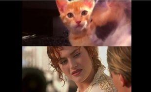 Une parodie de «Titanic» avec des chats...