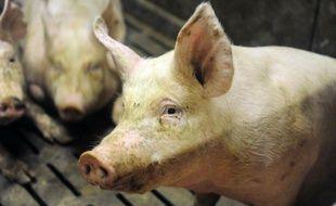 La Cooperl est le numéro du cochon en France.