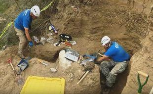 Un crâne de mammouth rare a été découvert par une équipe américaine de paléontologues jeudi 15 septembre 2016 sur l'île de Santa Rosa en Californie (Etats-Unis).