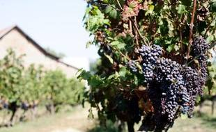 Le Domaine de Candie, propriété de la mairie de toulouse est un vrai domaine viticole avec ses vignes et ses chais. 30/08/2011 Toulouse