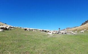L'estive d'Ourdouas, sur la commune de Sentein en Ariège, où l'incident a eu lieu.